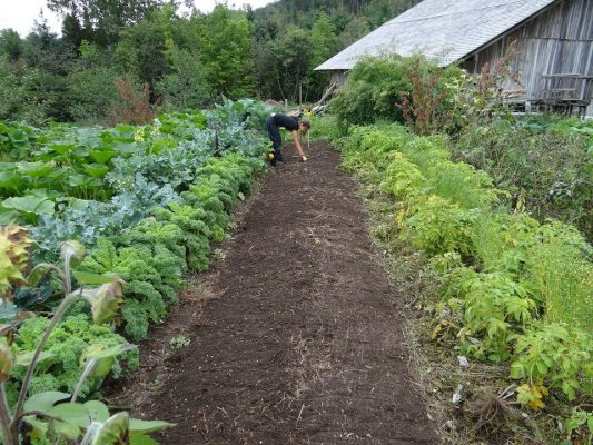 butte potager - ma permaculture