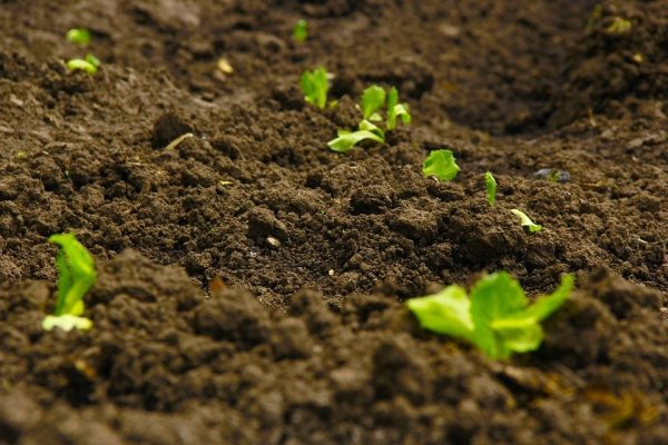 terre fertile pour jardin permaculture