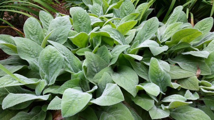 paillage végétatif ma permaculture