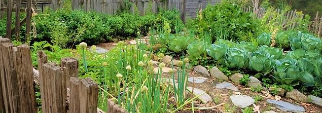 conseils et astuces gratuites pour jardin potager pas cher